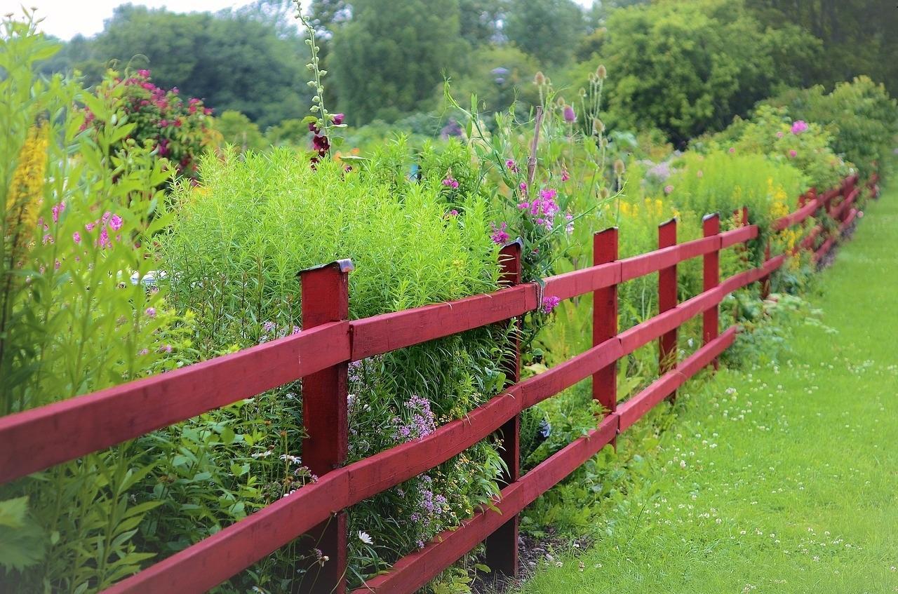 co posadzić wzdłuż ogrodzenia